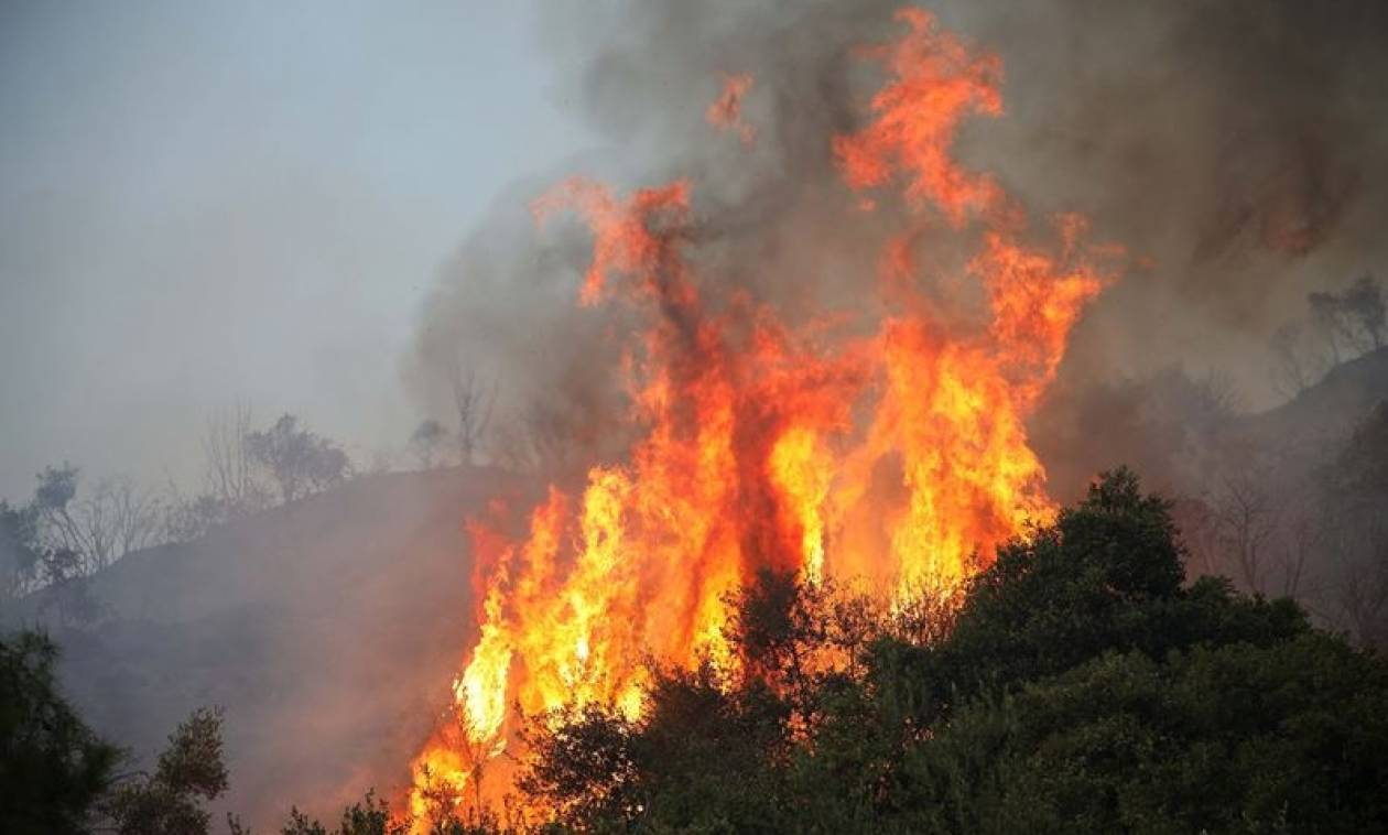 Φωτιά ΤΩΡΑ στην Δημητσάνα