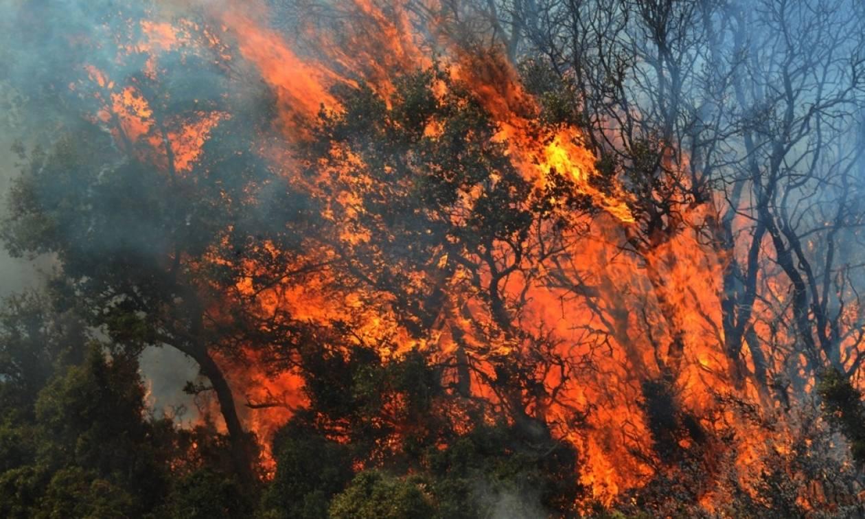 Φωτιά Τώρα: Στις φλόγες Αχαΐα, Εύβοια, Αργολίδα και Καρπενήσι