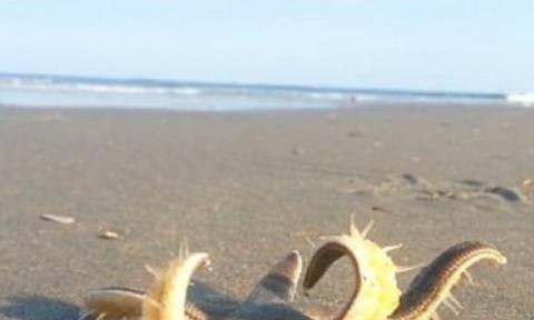 Ανατριχίλα: Δείτε τι εμφανίστηκε σε παραλία (video)