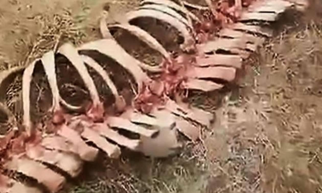 Τρόμος σε χωριό της Κίνας: Βρήκαν σκελετό δράκου (video)