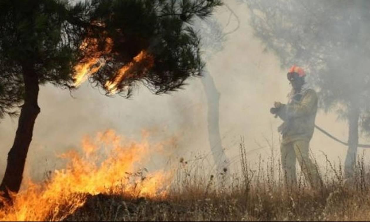 Μεγάλη φωτιά ΤΩΡΑ στην Ηλεία απειλεί οικισμό