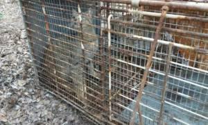 Εντοπίστηκε φουρόγατος στην Κρήτη; Ποιο είναι το «μυθικό» ζώο που αναζητούν οι επιστήμονες
