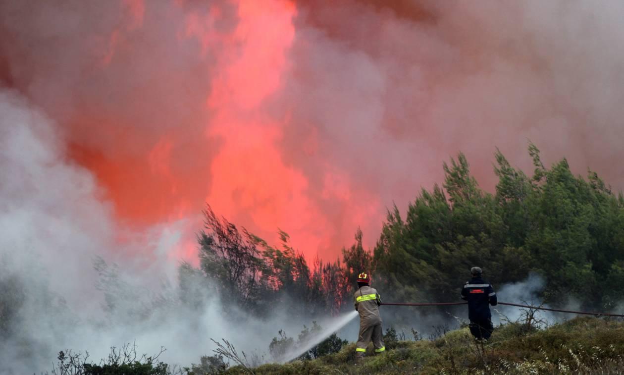 Φωτιά Ηλεία: Συνεχίζει να καίει τη Νεμούτα η πυρκαγιά