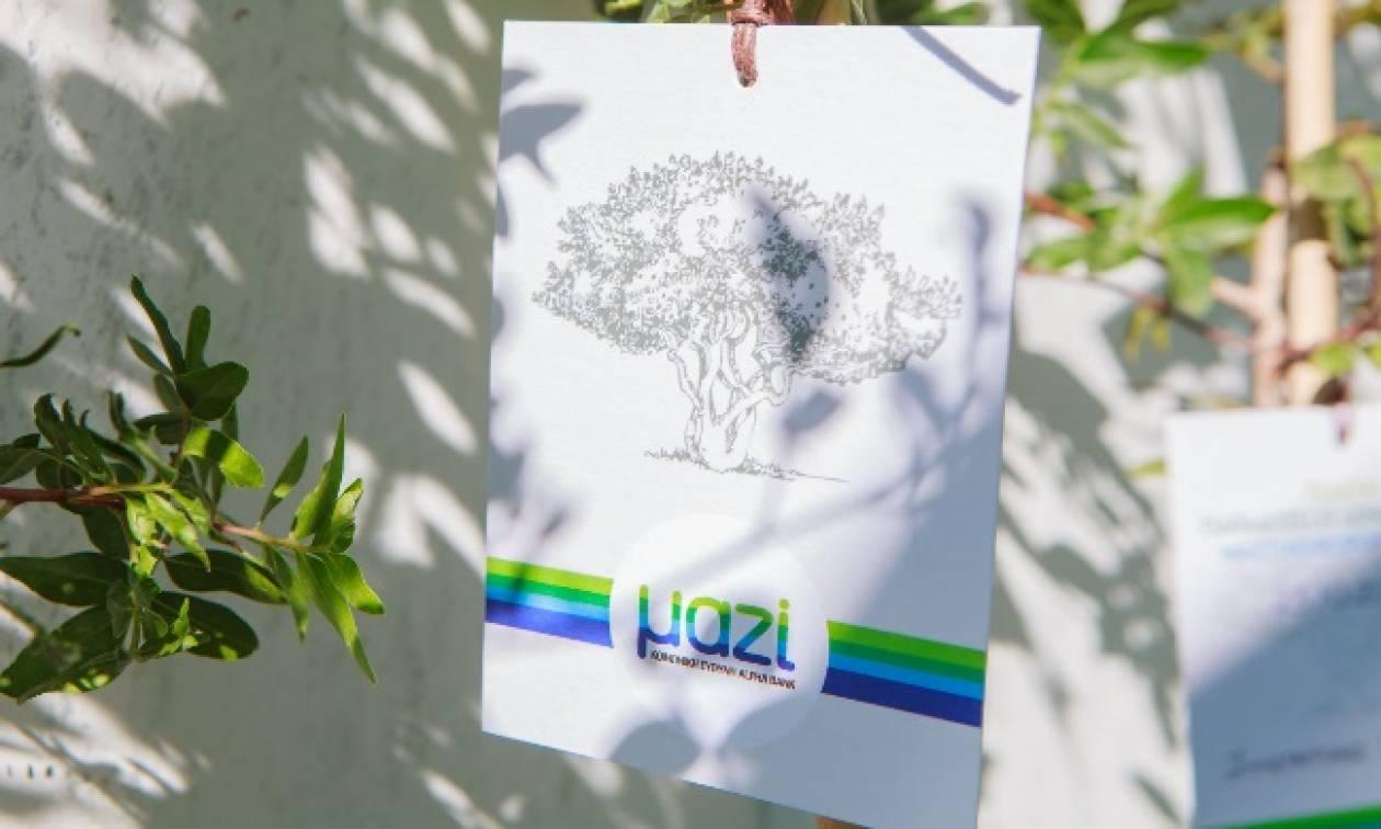 H Alpha Bank στηρίζει το έργο της Ένωσης Μαστιχοπαραγωγών Χίου για να ζωντανέψουν τα μαστιχόδενδρα