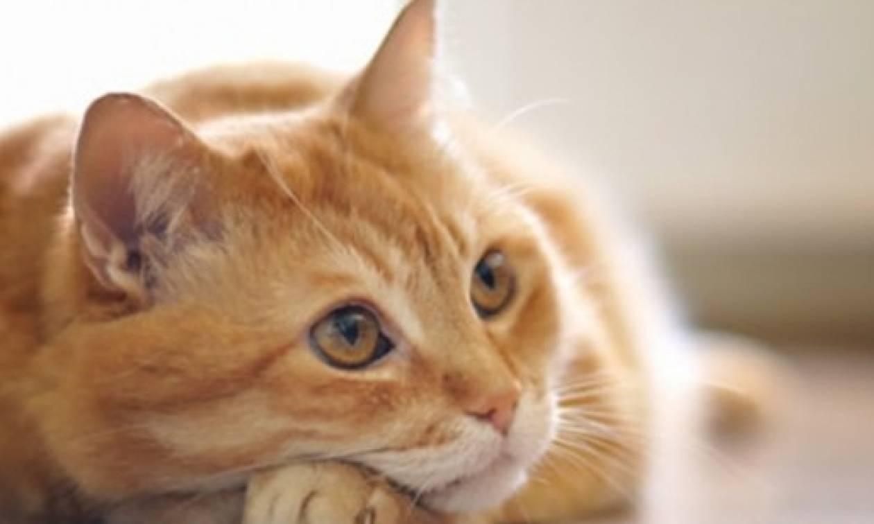 Γάτα με... ανθρώπινη μορφή προκάλεσε την παρέμβαση της αστυνομίας (video)