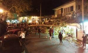 Πορταριά: Παραλίγο τραγωδία από πτώση πλάτανου - Τραυματίστηκε μια γυναίκα (pics)