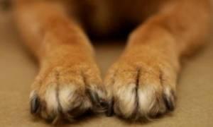 Απίστευτο περιστατικό στην Κρήτη: Πυροβόλησε σκύλο έξω από σχολείο
