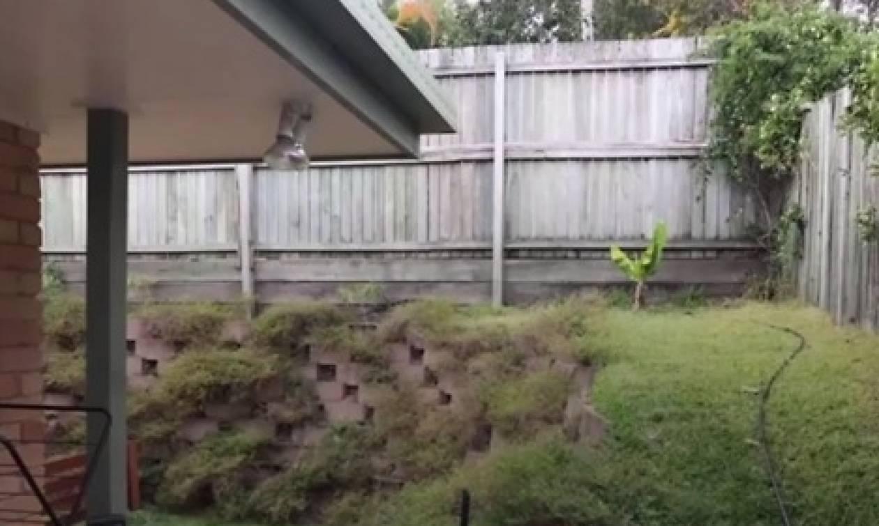 Σε αυτή τη φωτογραφία... κρύβεται ένα τεράστιο φίδι. Μπορείτε να το δείτε; (video)