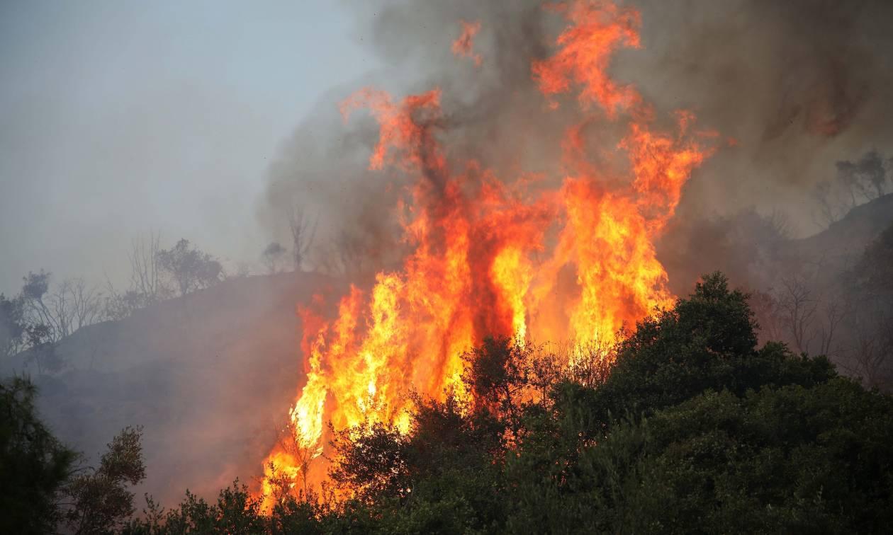 Φωτιά ΤΩΡΑ στο Πολυδένδρι Αττικής