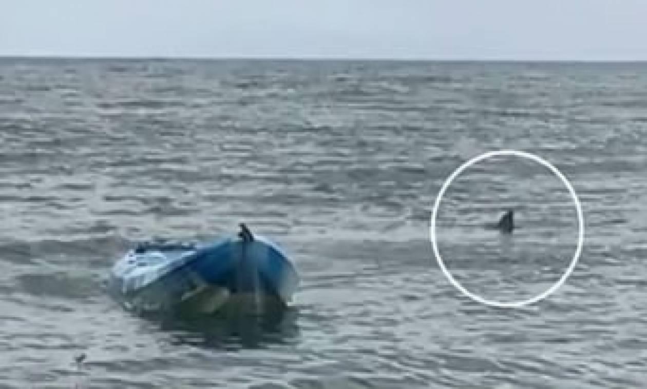 Τεράστιος λευκός καρχαρίας επιτέθηκε σε έφηβη: Πώς την έσωσε ο πατέρας της (vid)