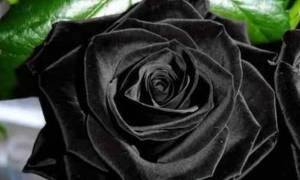 Θρήνος: Νεκρή η Μαριάννα Καλογήρου