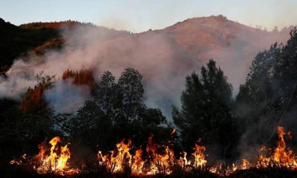 ΗΠΑ: Στους 43 oι νεκροί των καταστροφικών πυρκαγιών στην Καλιφόρνια (vid)