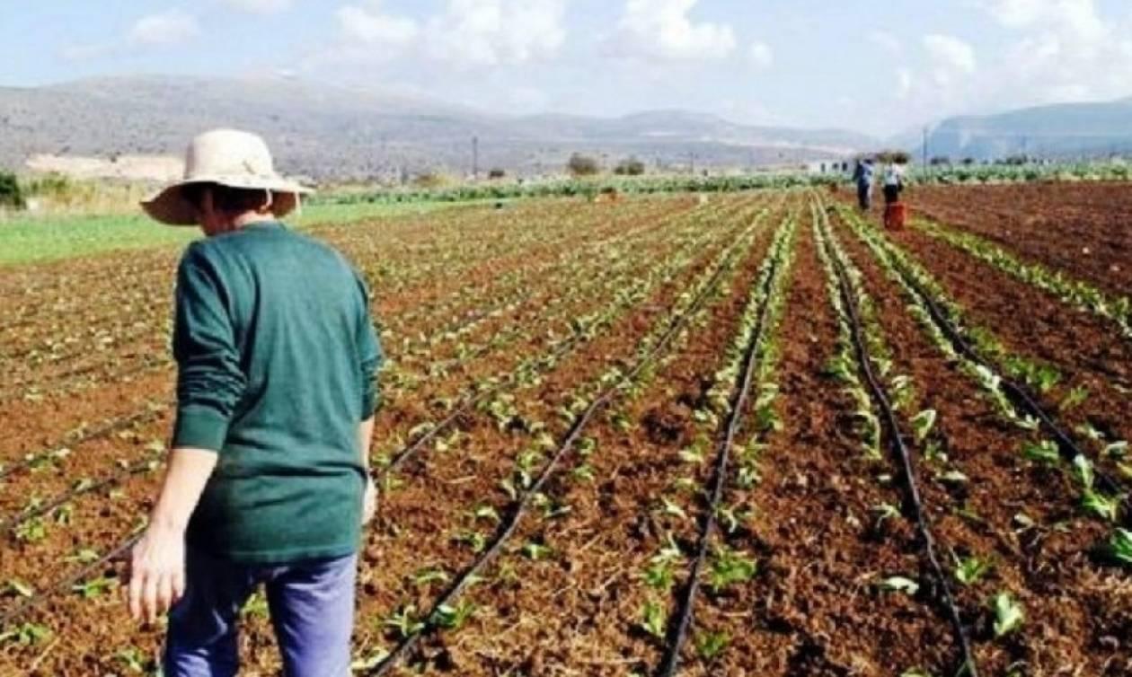 Βοήθημα 1.000 ευρώ σε 1.300 πολύτεκνες αγρότισσες - Όλες οι προϋποθέσεις και η διαδικασία