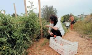 Βοήθημα 1.000 ευρώ για πολύτεκνες αγρότισσες: Μέχρι τις 6 Νοεμβρίου η υποβολή αιτήσεων