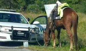 ΗΠΑ: Συνελήφθη 59χρονη επειδή οδηγούσε μεθυσμένη... ένα άλογο!