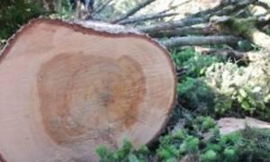 Θρήνος στη Λαμία για οικογενειάρχη που καταπλακώθηκε από δέντρο