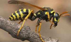 Ασύλληπτη τραγωδία: Νεκρός 27χρονος από τσίμπημα σφήκας