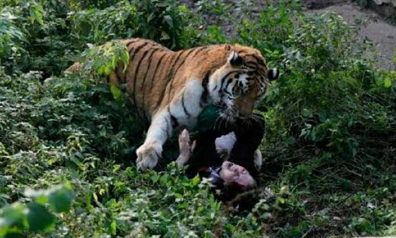 Μαρτυρία - σοκ: «Η τίγρη σχεδόν ξερίζωσε το κεφάλι της υπαλλήλου του ζωολογικού κήπου»