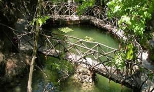 Σημαντική ανακάλυψη στην Ελλάδα: Νέος είδος εντόμου εντοπίστηκε στη Ρόδο