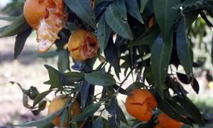 ΕΛΓΑ: Τις ζημιές που προκάλεσε το χαλάζι σε καλλιέργειες στην Δυτική Ελλάδα καταγράφει η Περιφέρεια