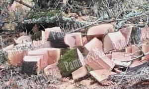 Συναγερμός στην Πρέβεζα: Ποιοι ρημάζουν το δάσος με τις βελανιδιές στο Βόκαμπο