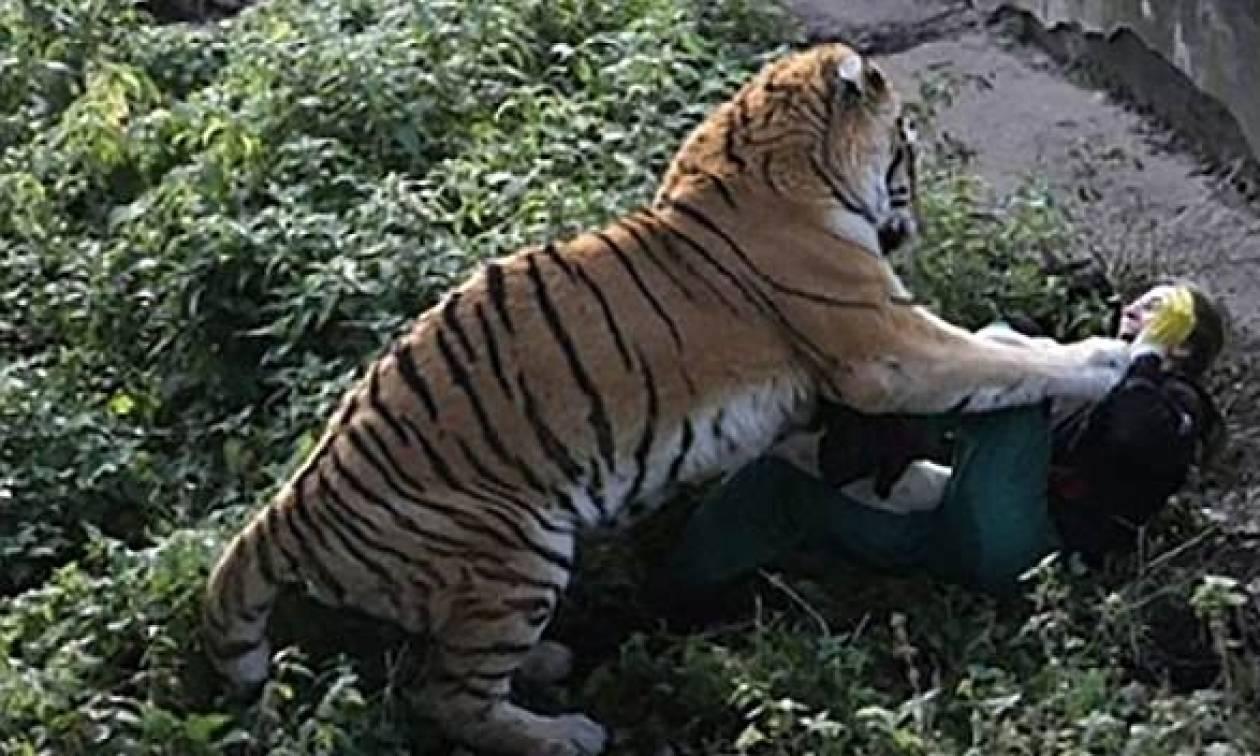 Συγκλονίζει η υπάλληλος του ζωολογικού κήπου που της επιτέθηκε τίγρης