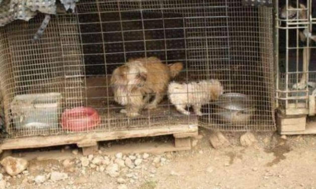 Κρήτη: Σφράγισαν κολαστήριο - υγειονομική βόμβα