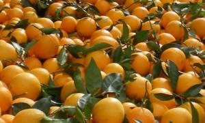 Προσοχή: Δεσμεύτηκαν δύο τόνοι ακατάλληλων φρούτων και λαχανικών στην αγορά Ρέντη