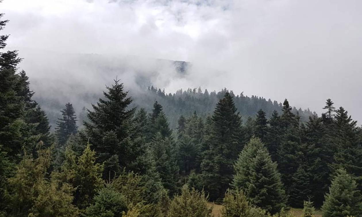 Πυρκαγιά σε ελατοδάσος στα Καλάβρυτα