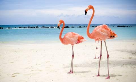 На Кипр прилетели фламинго