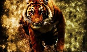 Πανικός στο Παρίσι: Άγρια τίγρη το έσκασε από τσίρκο (Pic)