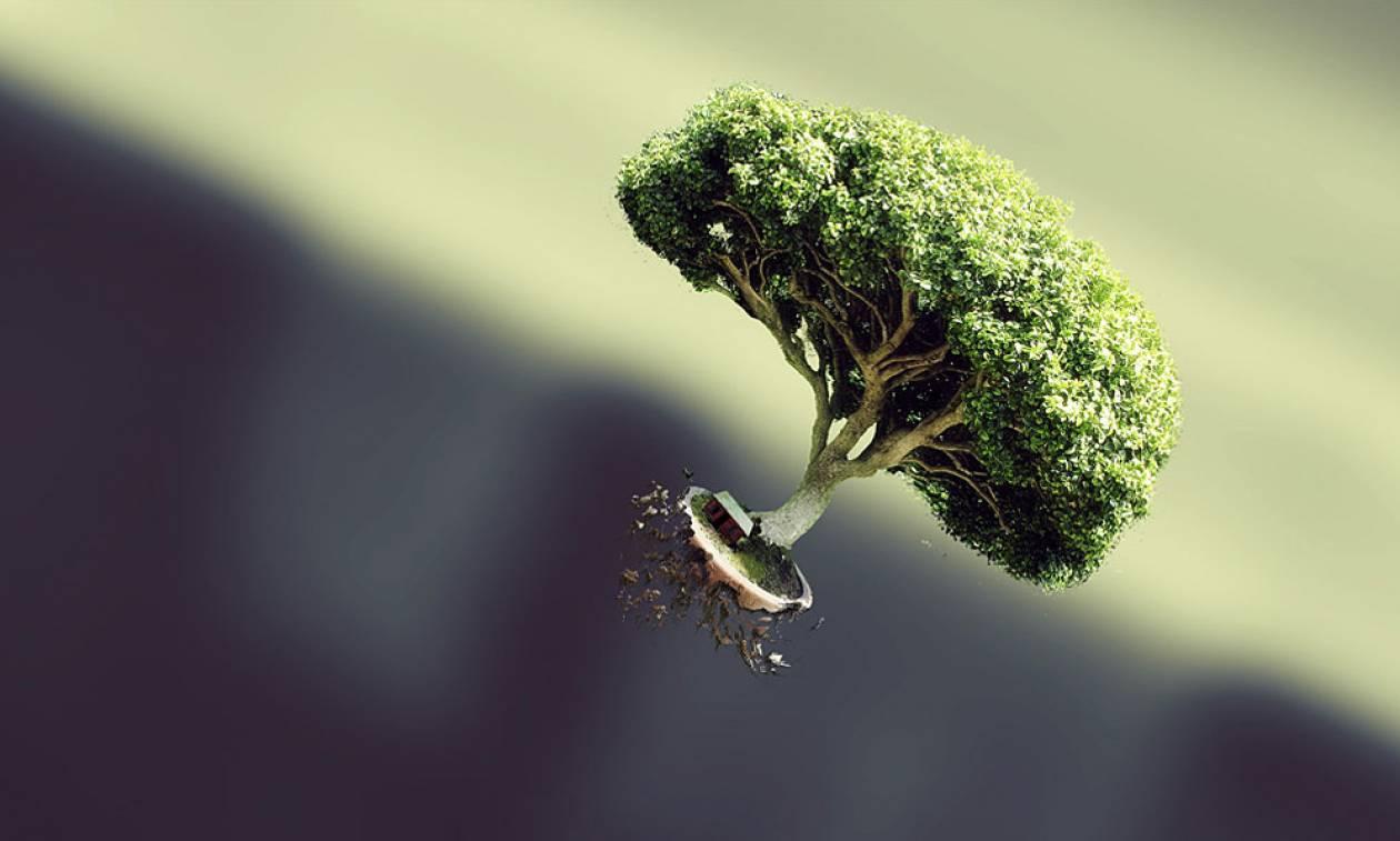 Κι όμως! Ακόμη και τα δέντρα χρησιμοποιούν το Twitter