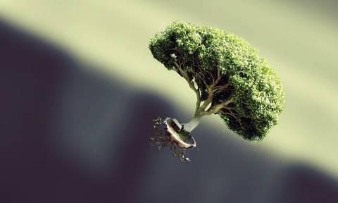 Κι όμως! Ακόμη και τα δέντρα χρησιμοποιούν το Twitter για λόγο που ούτε καν φαντάζεστε