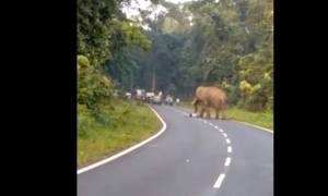 Βίντεο – σοκ: Ελέφαντας ποδοπάτησε μέχρι θανάτου άνδρα που ήθελε να τον φωτογραφίσει