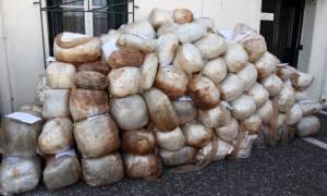 Προφυλακιστέοι και οι 11 για τη μεταφορά 1,6 τόνων κάνναβης με ταχύπλοο