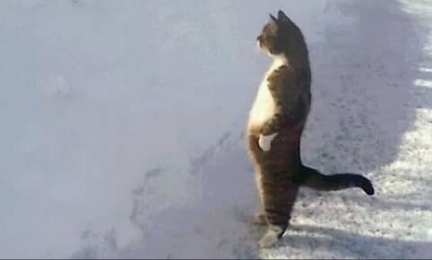Viral video: Είναι οι γάτες τα πιο αστεία πλάσματα στον πλανήτη;