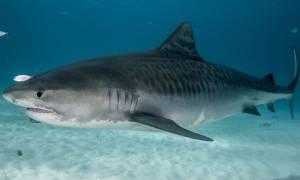Σοκ στην Κόστα Ρίκα: Πήγε για κατάδυση και την κατασπάραξε καρχαρίας