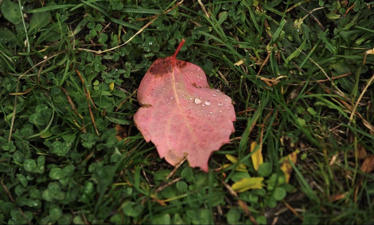 Weather forecast: Scattered rain on Sunday