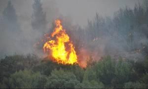 Κρήτη: Πυρκαγιά σε εξέλιξη στην Ιεράπετρα