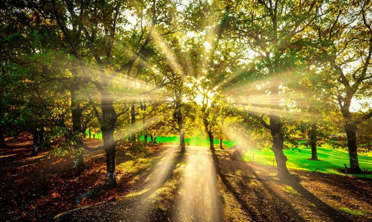 Συγκλονιστικές εικόνες από το δρυοδάσος της Φολόης – Ένας μέρος που πρέπει να γνωρίσετε από κοντά