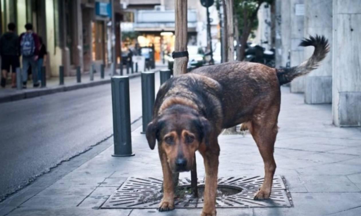 Αποζημίωση 1.000 ευρώ για δάγκωμα αδέσποτου σκύλου