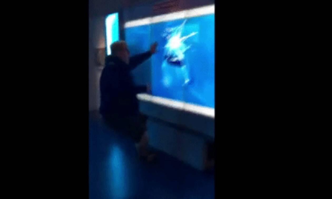 Επαθε το σοκ της ζωής του όταν επιχείρησε να... χαϊδέψει καρχαρία (video)