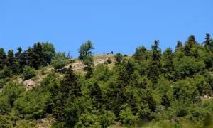 Θρίλερ στον Όλυμπο: Ορειβάτης ανασύρθηκε χωρίς τις αισθήσεις του από γκρεμό