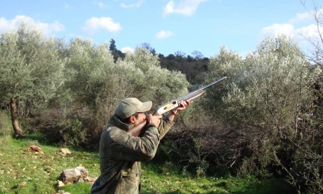 Τρόμος: Μαζεύουν ελιές εν μέσω πυροβολισμών