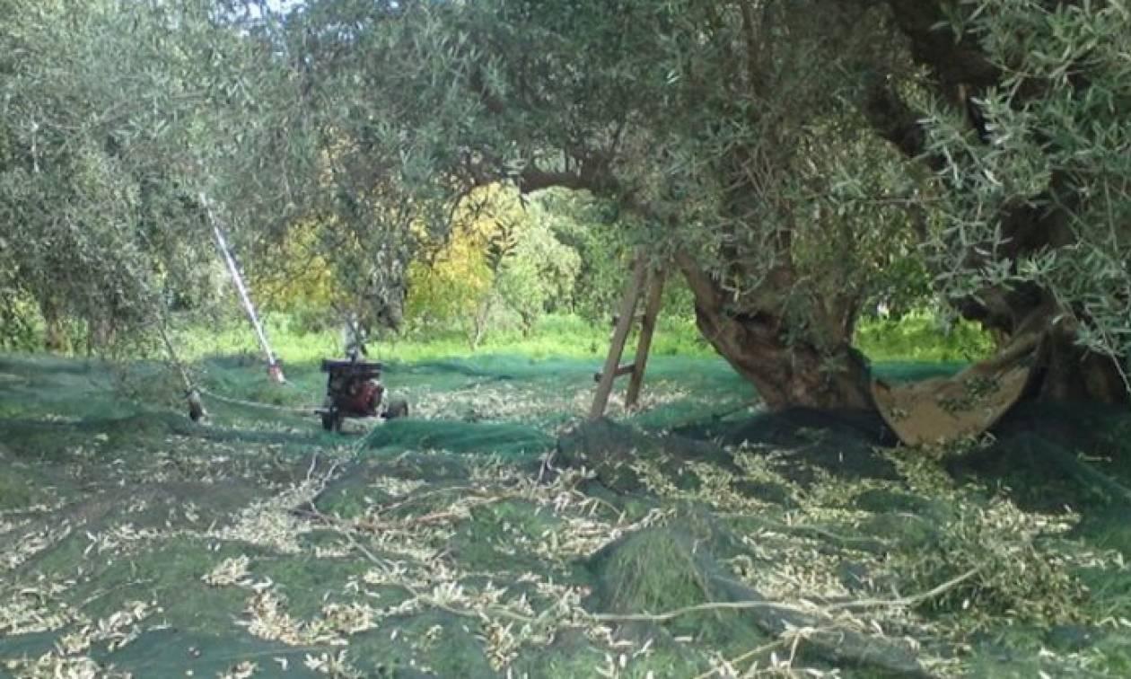 Επί ποδός οι Αρχές στην Κέρκυρα: Μυστηριώδης εξαφάνιση 32χρονου που δούλευε σε χωράφι