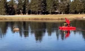 Εντυπωσιακό βίντεο: Πυροσβέστης σώζει ελάφι από παγωμένη λίμνη!
