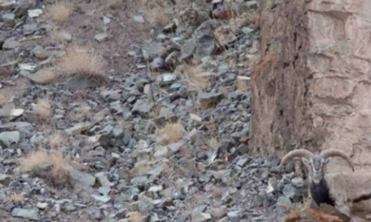 Σε αυτή τη φωτογραφία υπάρχει μια λευκή λεοπάρδαλη. Τι βλέπεις; (video)