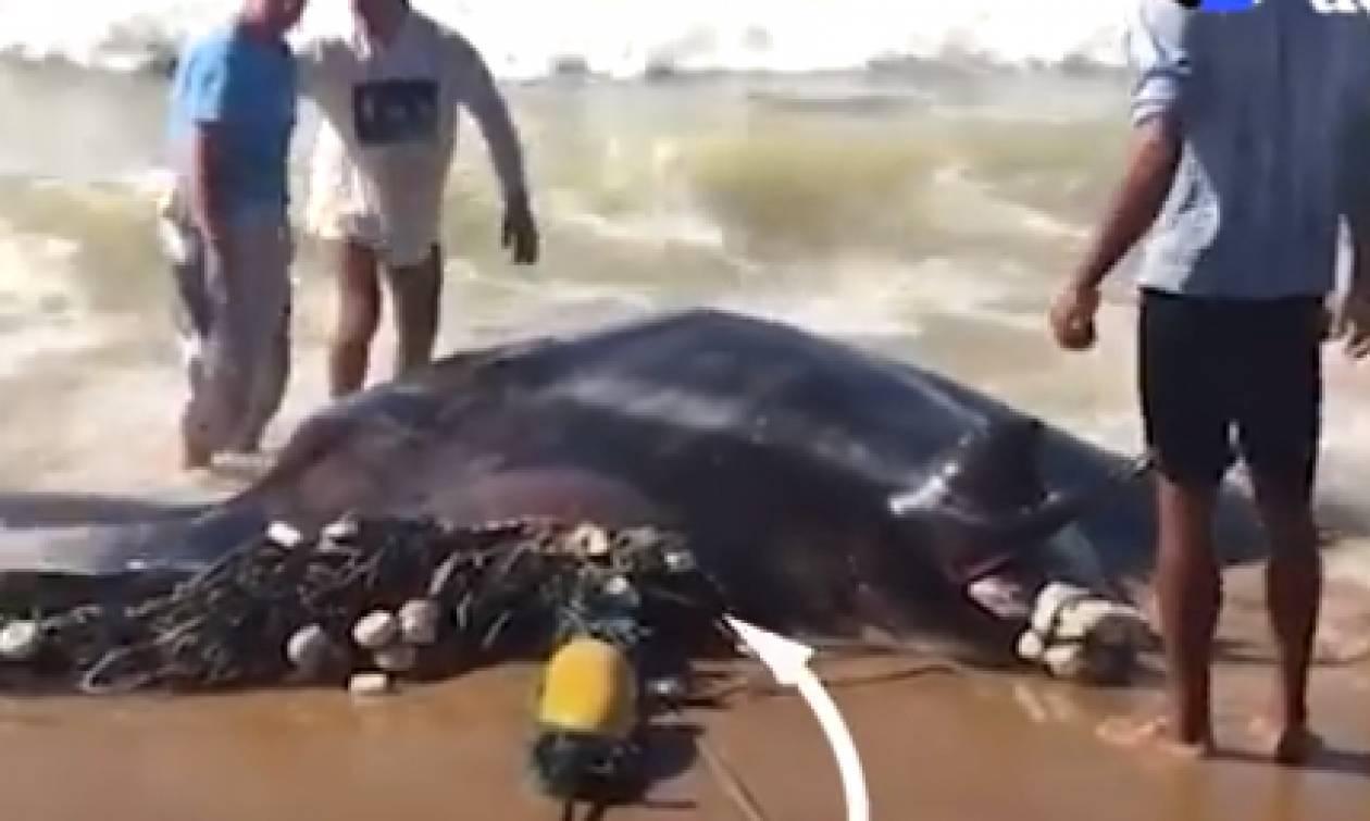 Βρήκαν ένα τεράστιο σαλάχι στην ακτή! Αυτό που ακολούθησε θα σας συγκινήσει (video)