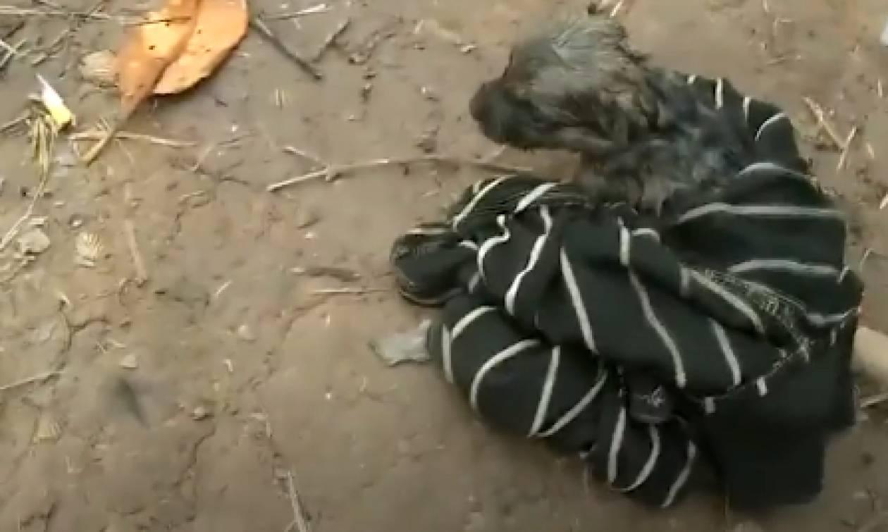 Βρήκε ένα κουτάβι πνιγμένο και έκανε τα πάντα για να το επαναφέρει στη ζωή... (video)