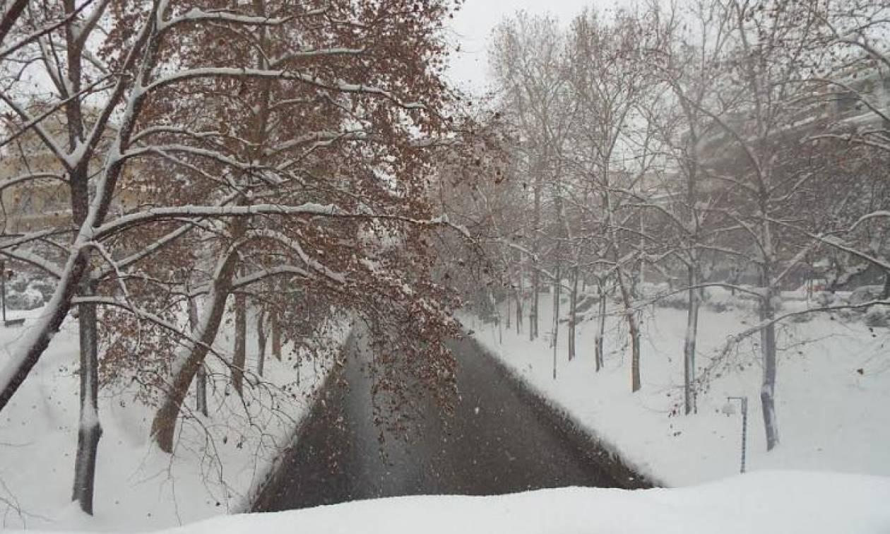 Καιρός: Πυκνό χιόνι στα Τρίκαλα - Επιχειρούν 25 εκχιονιστικά μηχανήματα (pics)